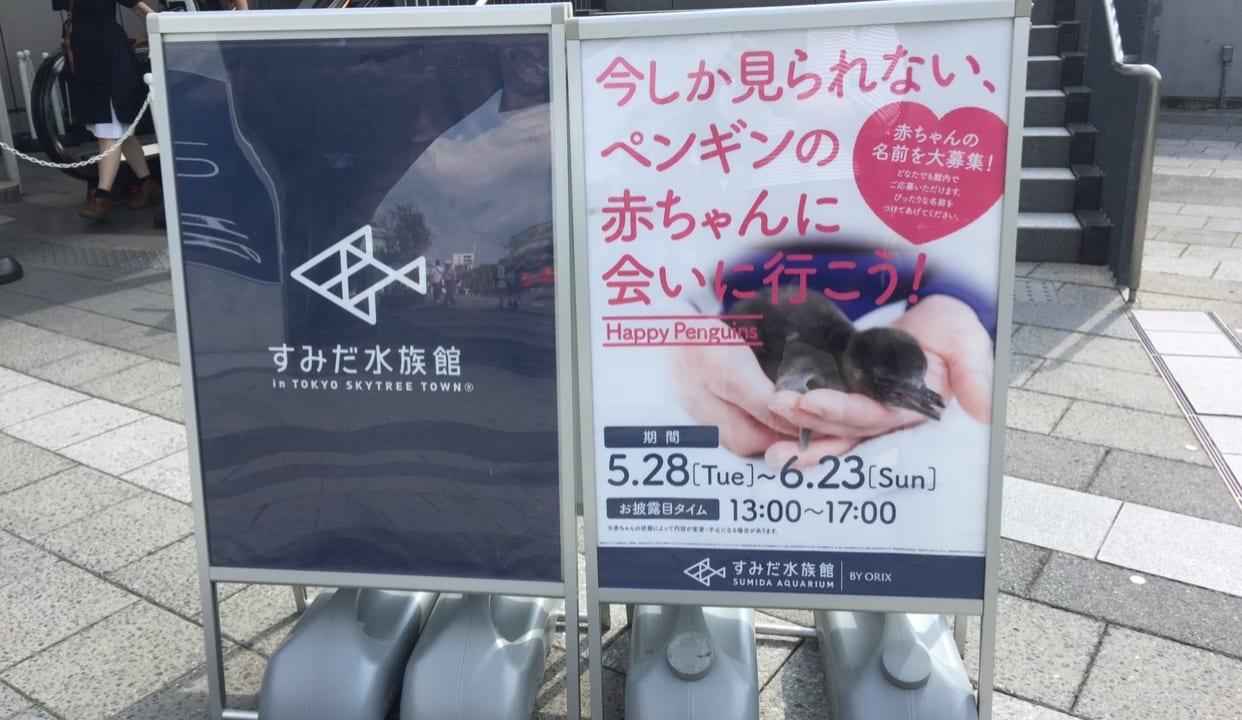 墨田水族館のペンギン赤ちゃん